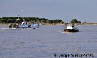 A report on the situation of the eel and the dismal history of the sturgeon in the Guadalquivir