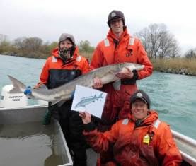 the-alpena-fish-and-wildlife-conservation-office-michigan-and-their-flat-fish-lake-sturgeon-monitor-the-real-lake-sturgeon-in-the-great-lakes-and-rivers-joann-banda-columbus-ohio-ecological