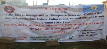 Banner at the gate of Bahir Dar University, Center of Bahir Dar City