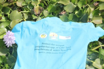 The T-Shirt on the water hyacinth