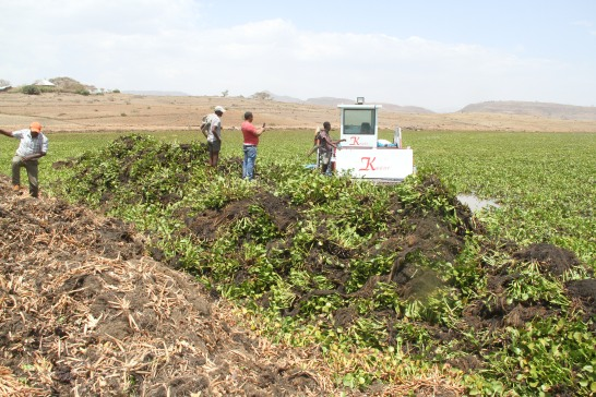 Photo of effort to remove water hyacinth with machine