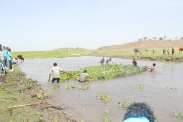 Removing water hyacinth by special net